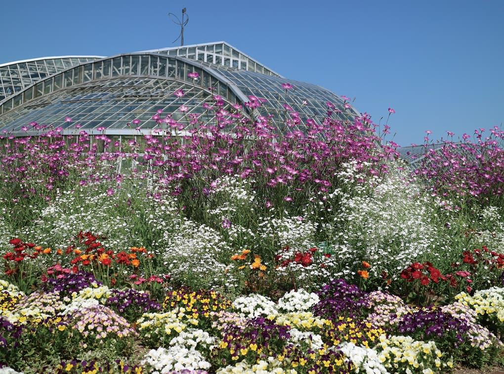 写真:京都府立植物園