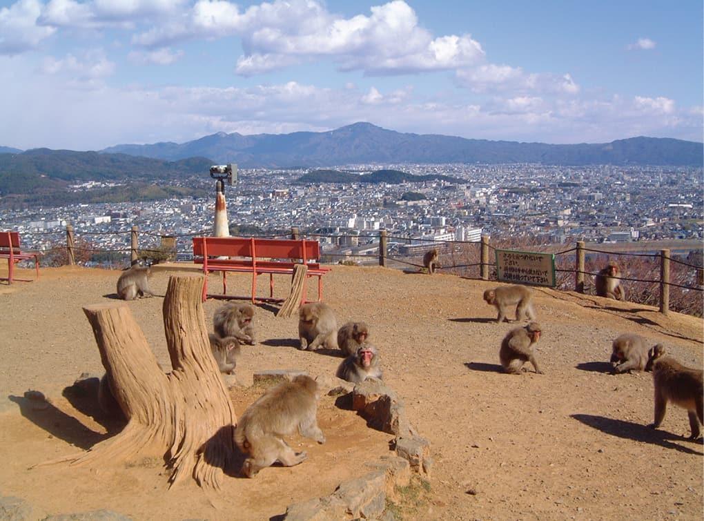写真:嵐山モンキーパークいわたやま