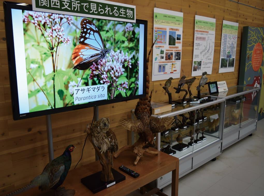写真:森林総合研究所関西支所 森の展示館