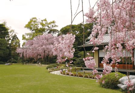 写真桃山の庭